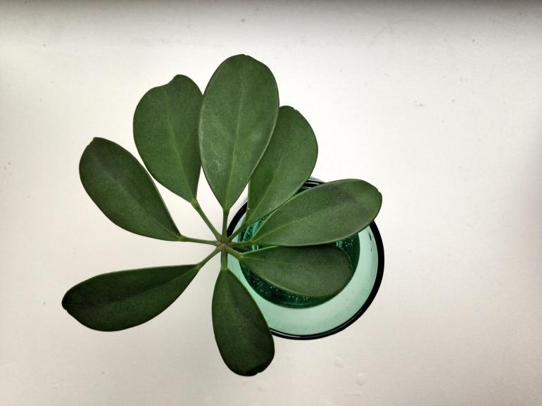 rostlina3