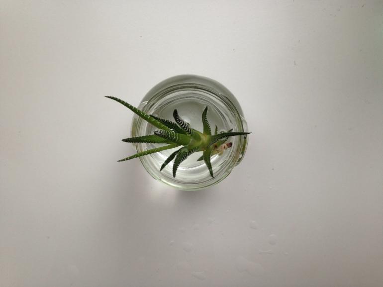 rostlina4